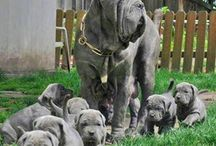Doggies(= / by Stacy Shumate