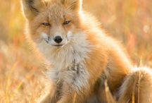 Nature - Alaska Wildlife