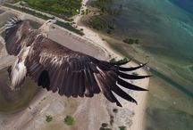 Aerial Photo/Video / Aerial Photography and Video Shot by Small UAVs