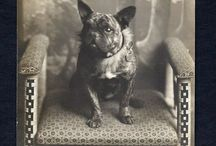 Old Frenchie