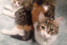 Anne ve Kızımız