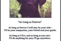 Good quotes about labs