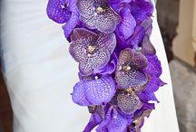 Флористика: Цветы (Орхидеи)