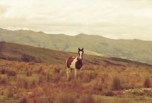 Horsies / Wild horses, i wanna be like them