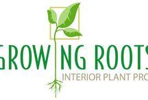 Expert Plant Care