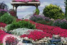 2015- New Plants- Shrubs, Perennials & Annuals / Look what's new for 2015! The hottest new annuals, perennials, and shrubs. Hundreds added this year.