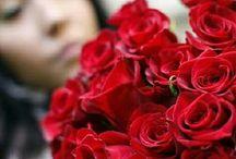 Αποστολη λουλουδια Valentines day / Δώρα για τον Άγιο Βαλεντίνο με λουλούδια,  αρκουδάκι,  σοκολατάκια,  καρδιές από το online ανθοπωλείο.