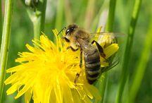 Honey articles