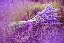 Masaż Kalyan / http://masazkalyan.wordpress.com - masaże: taoistyczna refleksologia stóp On Zon Su, Masaż Dotyk Motyla-technika Łagodnej Bio-Energetyki.