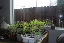 Gardening / Any sort of picture from the garden - starts, seeds, beds, compost, planning, full-grown plants, etc