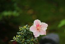 gradina ( gardening)