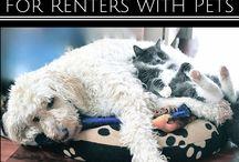 Life Hacks for Pets