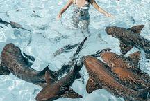 Travel Bahamas / #travel #inspiration all over #Bahamas #Carribean #beaches #thingstodo and more
