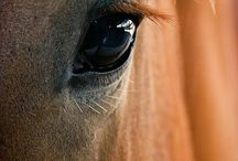 I smile when I see God look at me through the eyes of my horse.