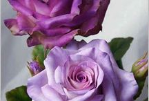 Rosas Com Lavanda
