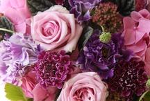 Flowers+