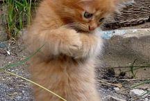 future kitty please