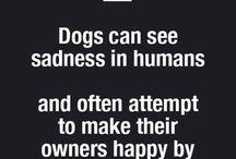 Companionship of a Dog