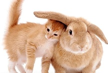 Animaux / #animaux #mignon #cute #fluffy #animals