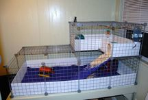 guinea pig cages / by Alexis Schell