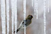 Winter / .....
