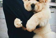 SweetDog