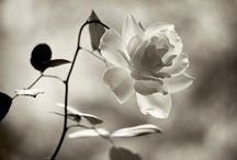 Beautiful flowers / by Suzanne Seguin
