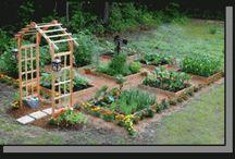 Gardening / by Jaime G