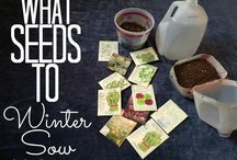 winter-sowing seeds