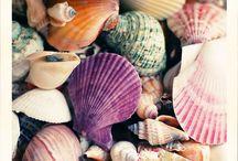 So in love with sea shells & sea glass