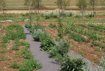 Projet permaculture et agroforesterie
