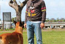 Dog Training DVDs / by Leerburg .com