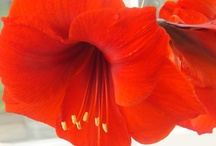 Flowers / by Samantha Smithen