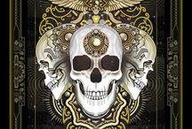 Skull / skull from web