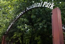 Camley Street Natural Park / Giving back is beautiful so we are proud to announce our partnership with London Wildlife Trust. This London based charity manages over 40 nature reserves across the capital, bringing nature into the lives of Londoners and providing important homes for the city's wildlife. Join us as we explore Camley Street Natural Park. https://www.pinterest.com/source/wildlondon.org.uk/