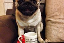 Perfect Pugs / We love Pugs!
