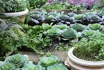 garden and kitchen