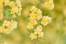 Flowers & Plants  / by Sara Keaty