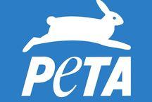 Organizaciones animaleras