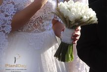 Romantic Wedding / Romantic Wedding - Adamantia & Giannis