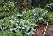 Garden - Gardenhouse - Kitchengarden