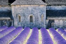 Provence / One of my favourite regions where my second home is. Have a house in the Var and is all the time looking for new adventures and places to visit.