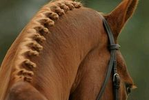 Horsey stuff - showing and plaiting