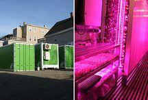 Container Garden / Inspiration Container garden project
