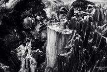 ARTE SECA / Fotos de saídas fotográficas revelando a essência existente nos pequenos detalhes dos troncos secos das árvores.