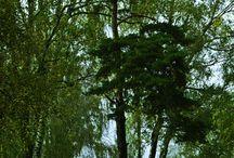 Сад расходящихся тропок / пейзажная фотография в черте города