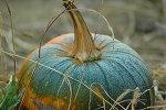 Autumn / by Robin Adams