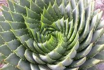 1-1-2-3-5-8-13... / Fibonacci sequence in nature, culture and art as golden ratio. https://en.wikipedia.org/wiki/Fibonacci_number