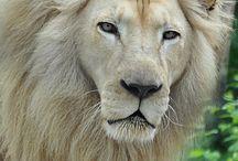 rey de la naturaleza