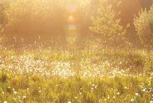 fields / by Iryna Elochkina